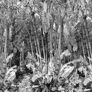 Casamance panoramisch behang Arbre du Voyageur zwart
