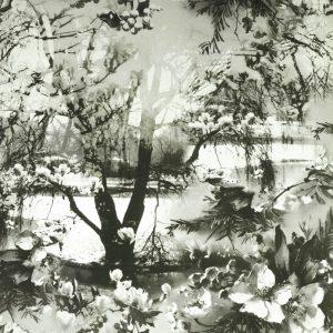Jean Paul Gaultier behang Brume zwart